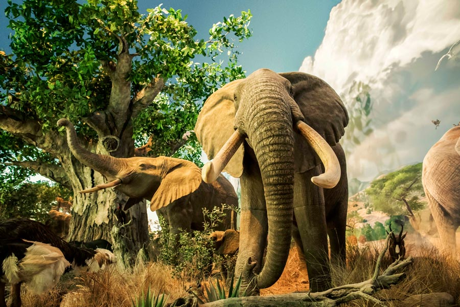 Wonders of Wildlife National Museum and Aquarium featuring elephant display in the great African hall