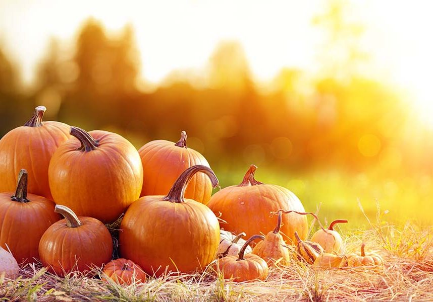 Pile of pumpkins with bokahed backgorund and sunflare